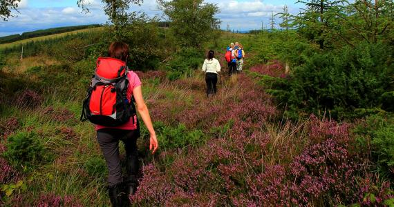 Slieve Bloom Walking