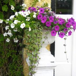 Ardmore Country House Flowers
